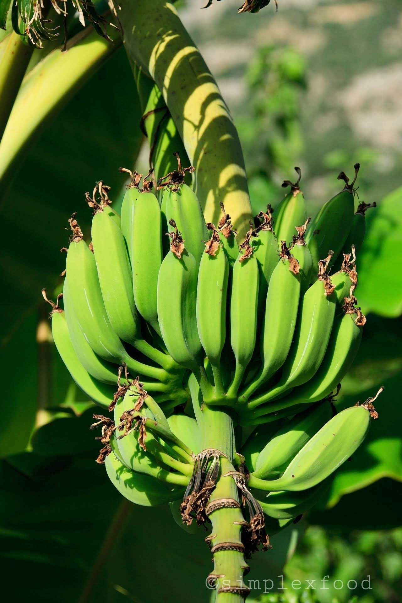 Interesting Facts About Banana